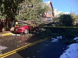 Fallen tree in Hudson County