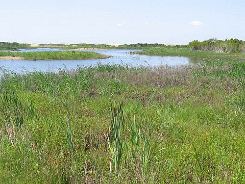 Cape May County Wetlands
