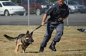 Police Dogs Would Get More Protections in NJ (Flickr: 111 Emergency)