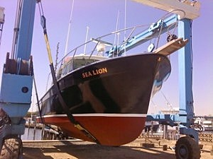 Sea Lion (Atlantic Wreck Diving)