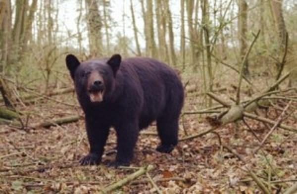 Bear Kills Dog Outside Vernon Home Authorities Say