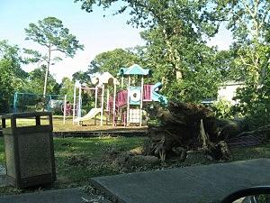 Storm damage in Northfield