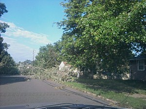 Tree blocking road in Northfield