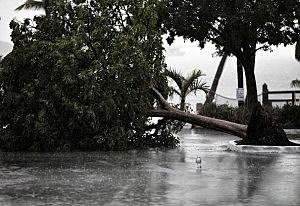 A seagull is stands next to a downed tree in a marina parking lot in Marathon, Florida