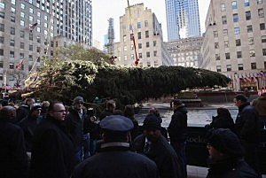Rockefeller Center Christmas tree is raised into position