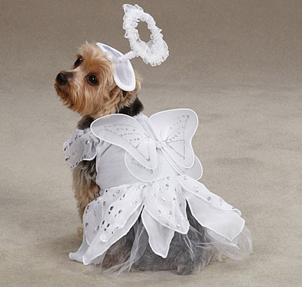 Top 10 Christmas Outfits For Dogs