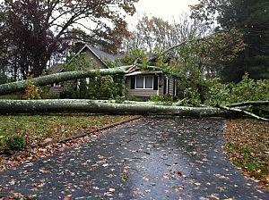 Tree across a driveway in Farmingdale