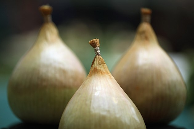 Could Onions be the Key to Survivng the Flu?