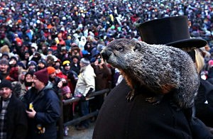 Punxsutawney Phil climbs on the shoulder of groundhog co-handler John Griffiths after making his 2013 prediction