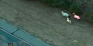 Horses run along the Atlantic City Expressway