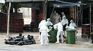 Workers in China where bird flu has been reported