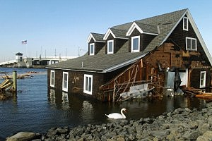 A swan swims near the flooded home in Barnegat Bay