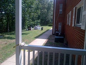 Bear at Woodmere Apartments in Jackson