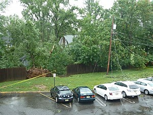Trees and power lines brought down by winds in Summit