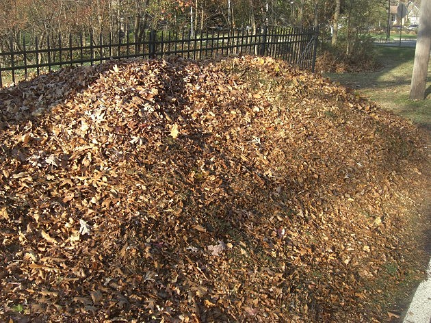 fence leaves