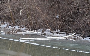 The banks of the Elk River, where Kanawha County emergency services eventually determined the chemical had seeped through a secondary containment barrier,