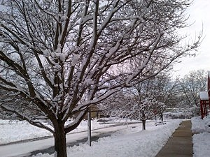 Snow covered trees in Ewing