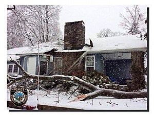 A fallen tree in Ocean Township (Monmouth County)