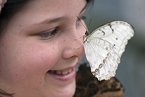 Butterfly on a girl's nose