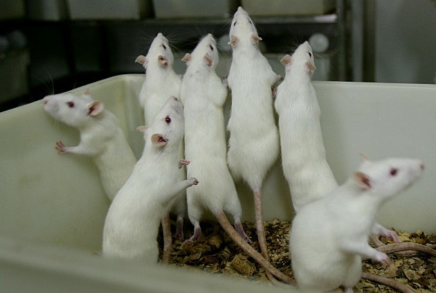 Woman has white mice released in her Philly home