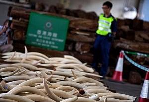 Hong Kong Customs Seize Endangered Species Cargo