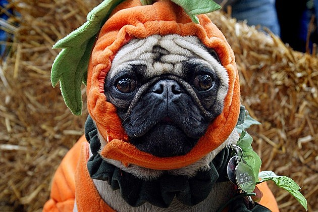 $350 million to be spent on pet costumes alone this Halloween survey says & Woof! $350 million to be spent on pet costumes alone this Halloween ...