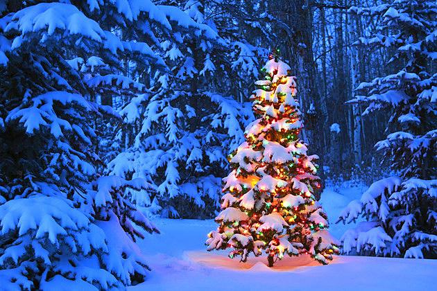 Real or fake how do you prefer your christmas tree poll