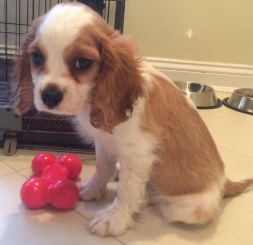 NJ family spent almost $10K on pet store puppy that died, lawsuit claims