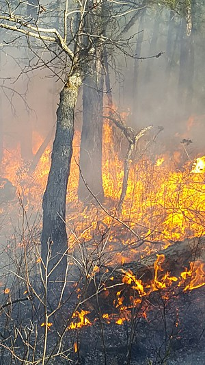 Brush fire in Greenwood Forest WMA in Manchester