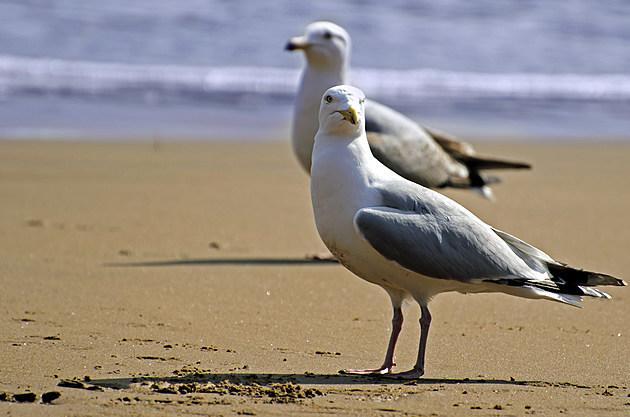 seagull-on-the-beach
