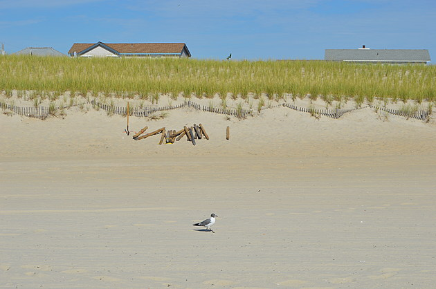 A seagull loving the beautiful beach weather.  (Dan Zarrow, Townsquare Media)