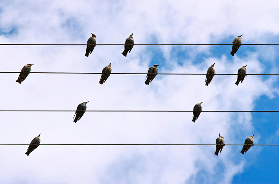 Why do birds sit on wires? NJ researcher thinks he knows