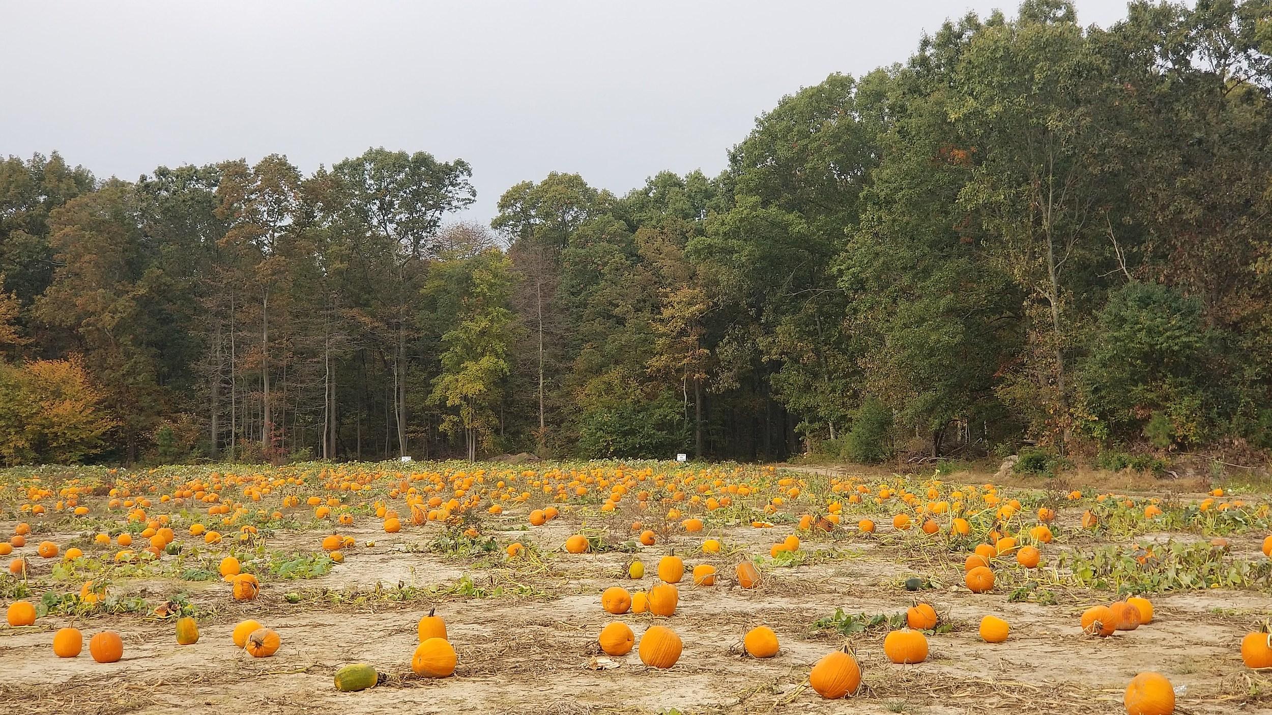 Dry and seasonable weather Monday – rain returns to NJ Tuesday